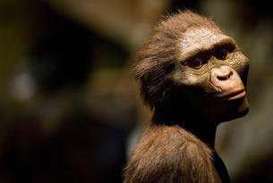 Inteligencia y evolución