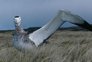 Complejo del albatroz en superdotados