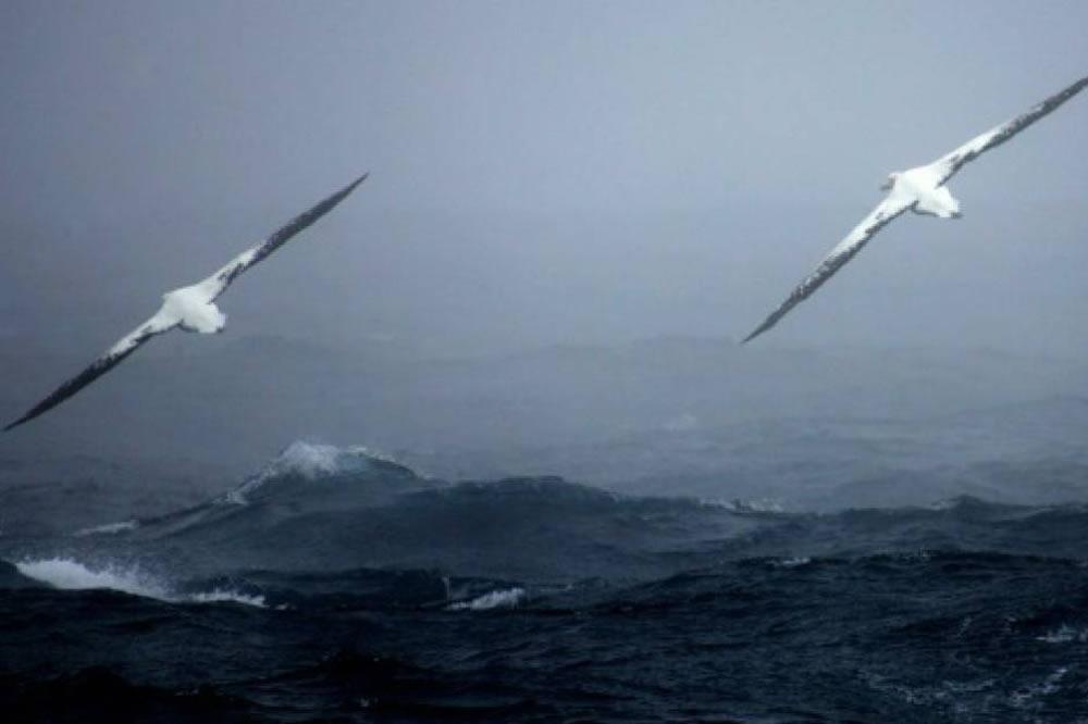 Complejo del albatroz