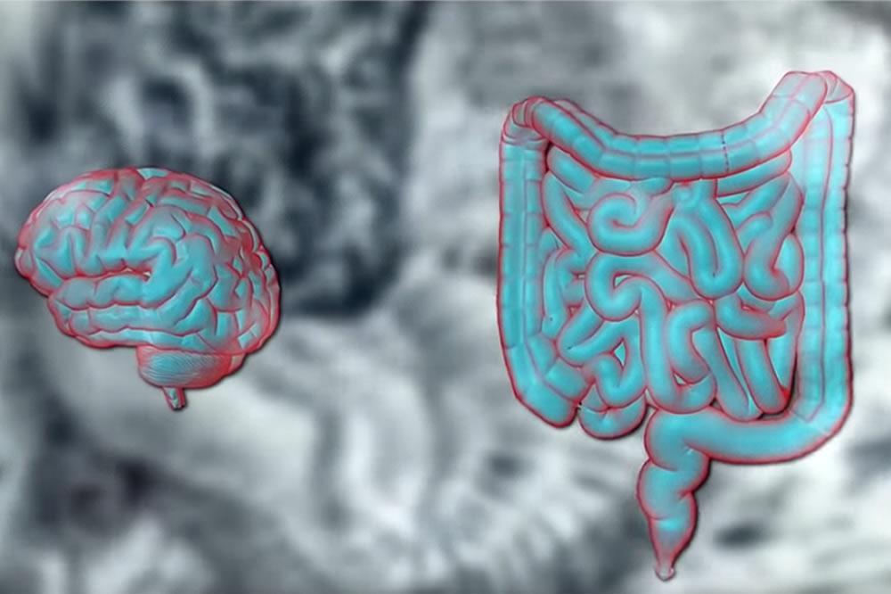 Segundo cerebro en el vientre