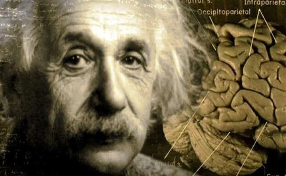 Cerebro Albert Einstein alto cociente intelectual